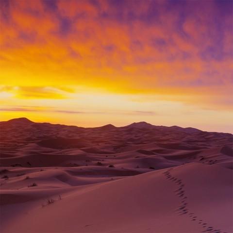 Trip in the sahara